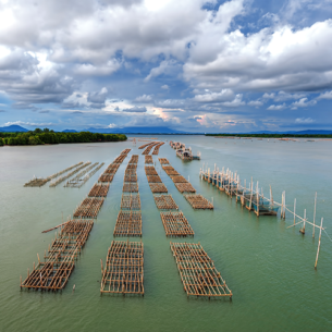 Oyster farming panel in the sea ,Thailand copie